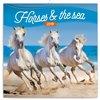 Obálka knihy Poznámkový kalendář Koně a moře 2019