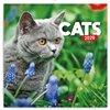 Obálka knihy Poznámkový kalendář Kočky 2020, 30 × 30 cm