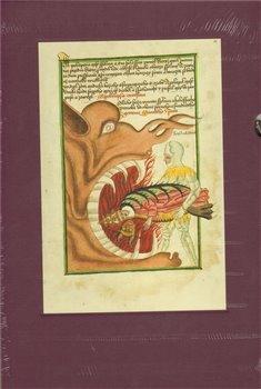 Obálka titulu Jenský kodex