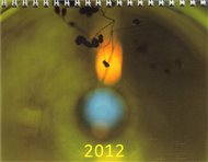 Kalendář Daniel Reynek 2012 - stolní