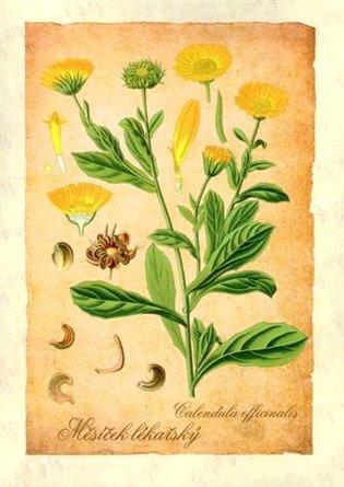Reprodukce Léčivé rostliny - Klára Trnková | Booksquad.ink