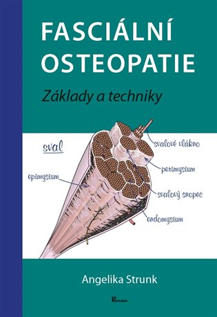 Fasciální osteopatie:Základy a techniky - Angelika Stunk | Booksquad.ink