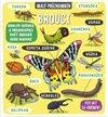 Obálka knihy Malý průzkumník - Brouci