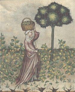 Obálka titulu Zahrada slov