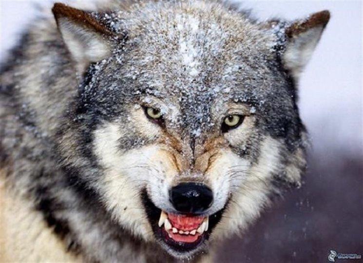 Hledá se vrah milenky Rudolfa II. - Zkrotit vlka Benjamina Blacka