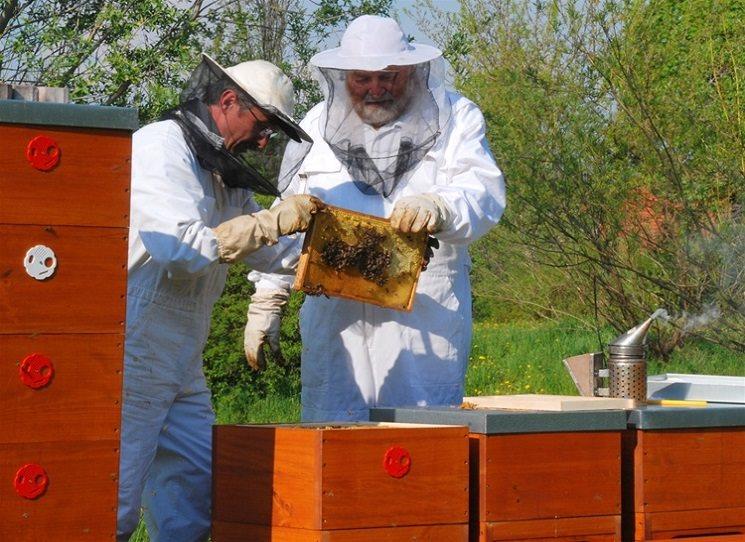 Dělat do včel a aspoň trochu jim rozumět