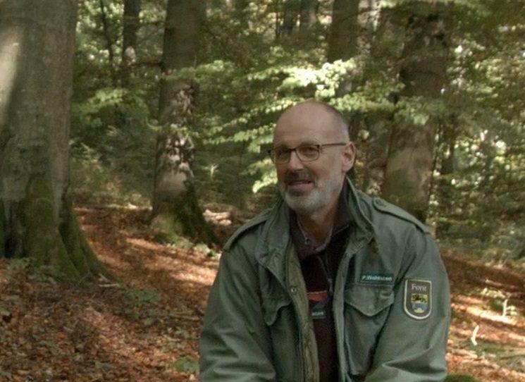 Skrytý život stromů - rozhovor s Peterem Wohllebenem