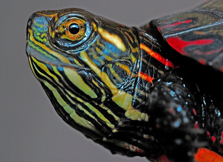 Atlas či spíše umělecké dílo? Dá se říci, že Atlas poetické zoologie je vlastně obojí. Emmanuelle Pouydebat ve své výjimečné knize zavádí čtenáře do tajuplného a často neznámého světa mnohdy prazvláštně vyhlížejících živočichů, které se málokomu podaří spatřit na vlastní oči.