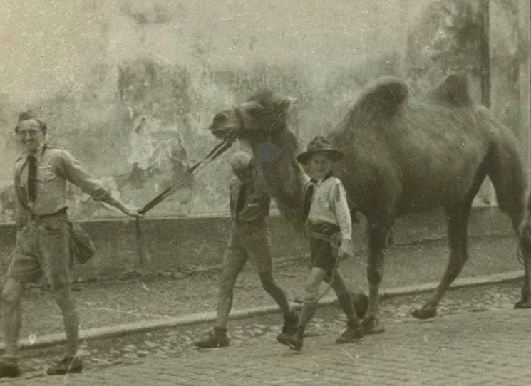Dobrodružství, které nevymyslíš! Miloš Doležal ve své knize Pepito, (ne)plivej! vypráví příběh, který se skutečně stal. Dnes již nezjistíme, zda velbloudice utekla z nějakého rozprášeného cirkusu, sovětským či rumunským jednotkám, anebo byla kořistí z německé zoo, nicméně akce, kterou pohledští a brodští skauti podnikli, je naprosto jedinečná. Dovedli velbloudici v červnu 1945 z Havlíčkova Brodu do pražské zoo a zachránili tak Pepitu (později přejmenovanou na Junačku) před utracením.