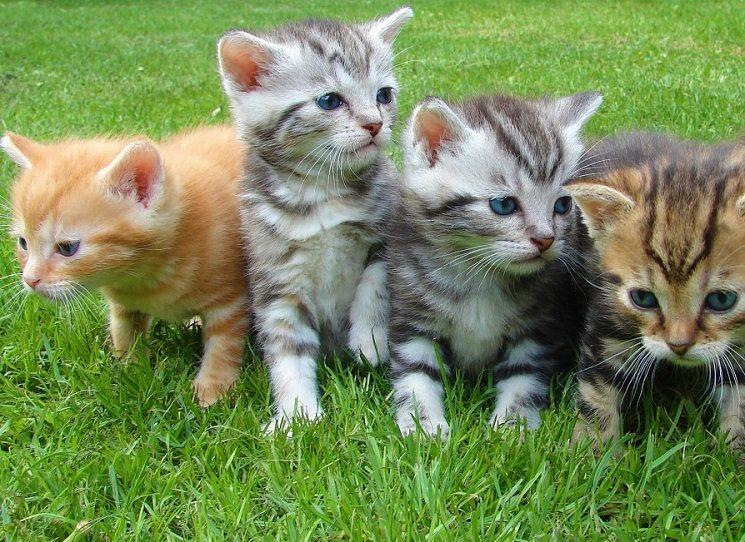 I koťata posílají do školy!